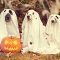 Grab some free patterns to level up your Halloween costume this year
