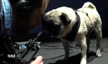 Halo Infinite will include the voice talents of… this Pug