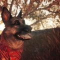River, the gorgeous actor of Fallout 4's Dogmeat, has died